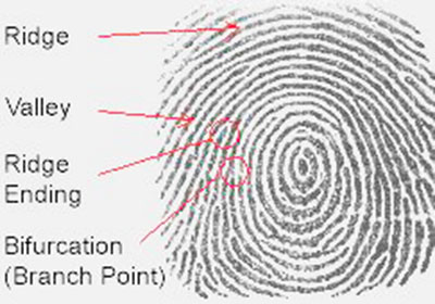 Sample Fingerprint Image