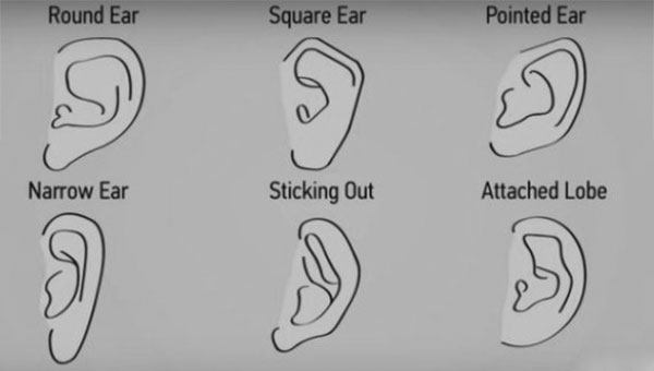 Different Ear Shapes