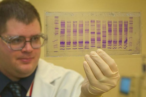 examining dna profile