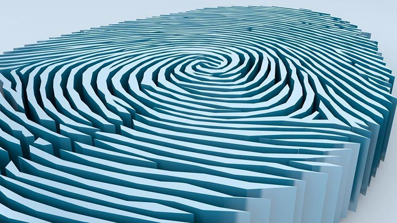 fingerprint most popular biometric modality