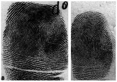 rolled and flat fingerprint image