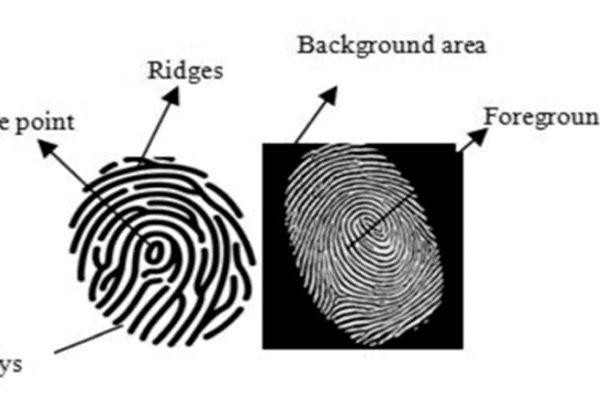 fingerprint structure
