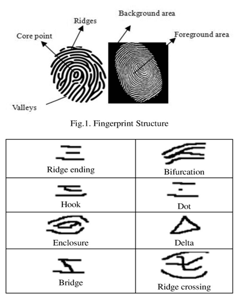 minutiae points in a fingerprint image